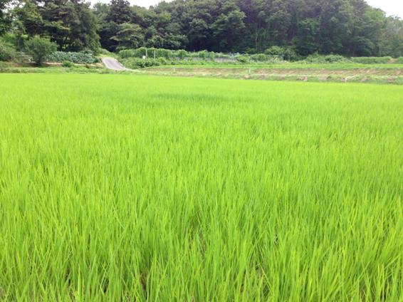 水田と美味しいお米を守る村